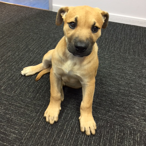 This beautiful 3 month old pup has a lovely nature and is super friendly.